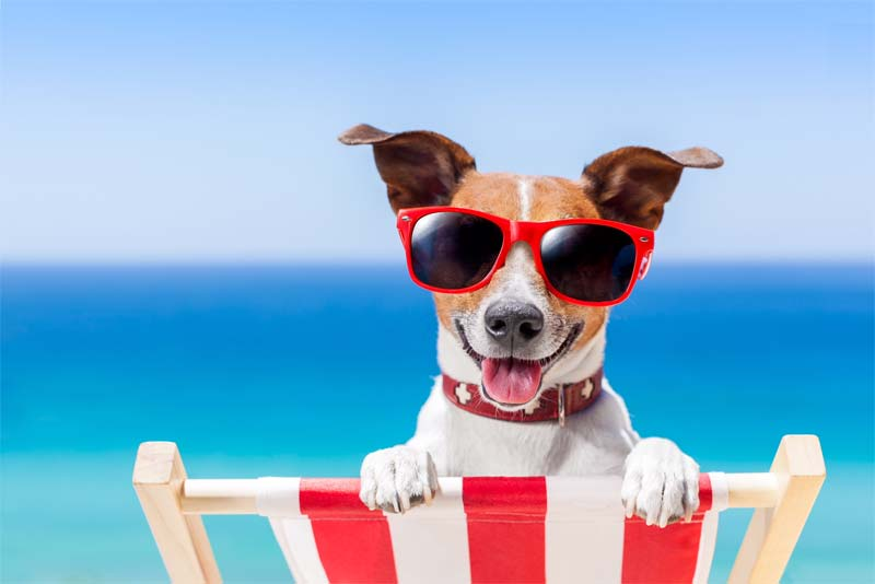 keep pets safe this summer